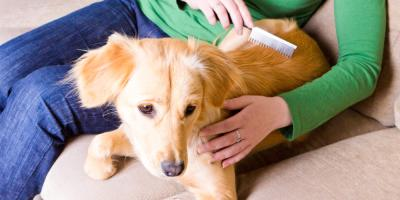 The Do's and Don'ts of Pet Grooming at Home, High Point, North Carolina