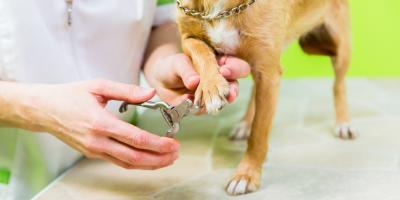 5 Reasons Pet Grooming Is Essential for Dogs & Cats, Keaau-Mountain View, Hawaii
