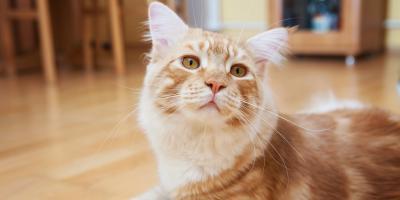 4 Benefits of Cat Grooming, Jefferson, Ohio