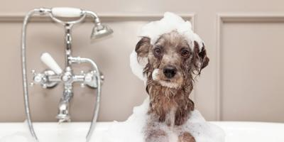 3 Reasons to Hire a Professional Dog Groomer, Middletown, Pennsylvania