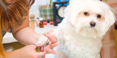 4 FAQ About Pet Grooming, Elyria, Ohio