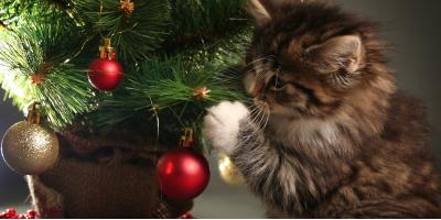 How to Cat-Proof a Christmas Tree, Clarksville, Arkansas