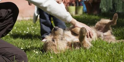Pet Health Professionals Explain Why Your Dog Gets Age Spots, Hilton, New York