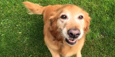 Walworth Kennel Explains How to Put Pep Back in Your Senior Dog's Step, Walworth, New York