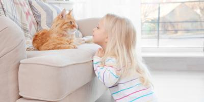 3 Signs That Your Cat Vomiting Is a Pet Health Problem, Ewa, Hawaii