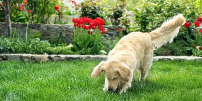 Local Veterinarian Reveals Common Plants Harmful to Your Pet, Flatwoods-Russell, Kentucky