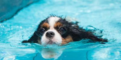 The Do's & Don'ts for Swimming Dogs, Newport-Fort Thomas, Kentucky
