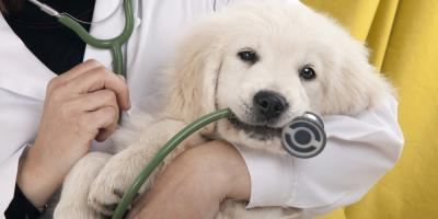 Milford Veterinarians Explain 3 Important Facts About Vaccinations, Milford, Ohio