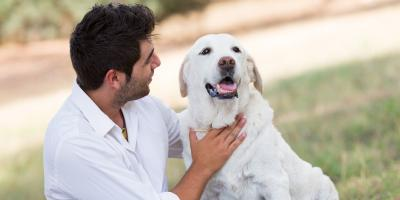 How to Prepare for Your Dog's Passing, Springfield, Ohio