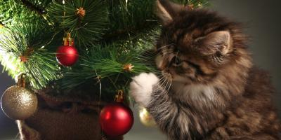 How to Keep Your Cat Safe Around the Christmas Tree, Nicholasville, Kentucky