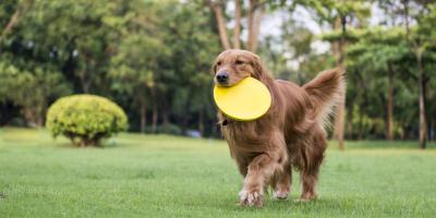 4 Perfect Dog Breeds for Families, Highland Village, Texas