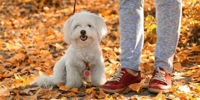 Pet Sitter vs. Kennel: What You Should Consider, Sunrise, Florida
