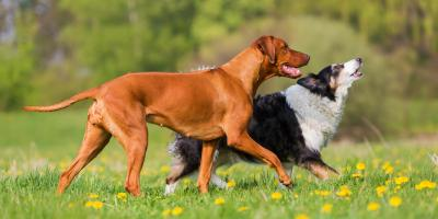 4 Tips to Prepare Your Dog for Boarding, Manhattan, New York