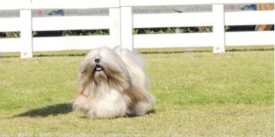 3 Reasons Your Long-Haired Dog Needs Summer Pet Styling, Hamilton, Ohio