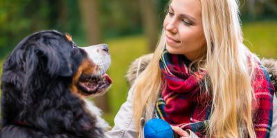 What Your Dog Needs to Be Ready for Break-Up Season, Anchorage, Alaska