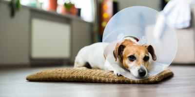 5 Tips to Help Your Pet Recovery After Surgery, Montgomery, Ohio