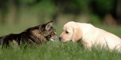 Why Spaying or Neutering Is Such an Important Pet Surgery, ,