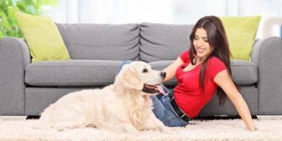 How Often to Hire Carpet Cleaners for Pet Urine Odor Removal, Concord, North Carolina