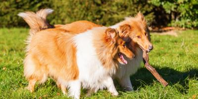 Veterinarian Explains the Do's & Don'ts of Socializing Your Dog , South Shenango, Pennsylvania