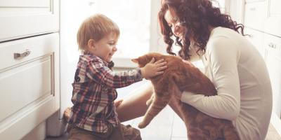 Why You Should Continue Pet Flea Prevention in the Winter, Springfield, Ohio