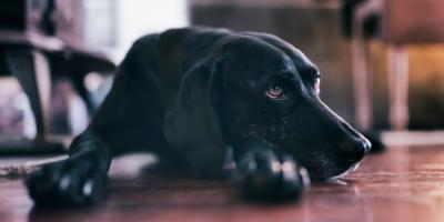 3 Tips to Help Your Aging Canine , Springfield, Ohio