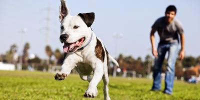 How to Protect Your Lawn From Dog Urine, Miami, Ohio