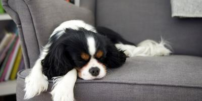 3 Common Dog Sleeping Positions, Covington, Kentucky