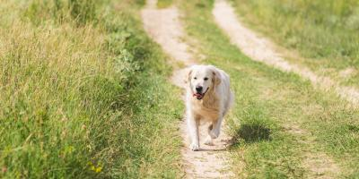 3 Summertime Safety Tips for Dogs, Dothan, Alabama