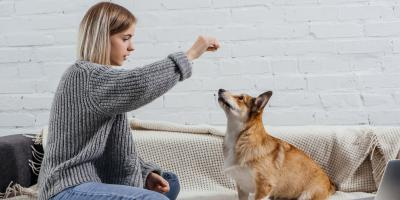 How Can You Care for a Deaf Dog?, Clarksville, Maryland