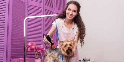 3 Reasons Why it Pays to Leave Pet Grooming to the Pros, Miami, Ohio