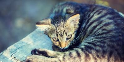 What Is the Difference Between Stray & Feral Cats?, Stratford, Connecticut