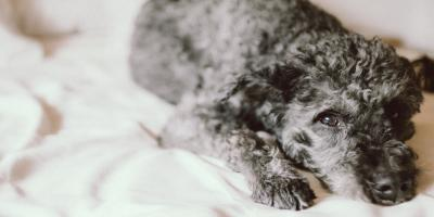 Hey Rover, Move Over! 8 Tips on Sleeping With Your Dog, Manhattan, New York