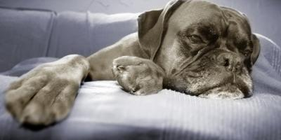 5 Symptoms to Look for in Aging Pets, Evergreen, Montana