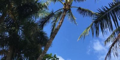 5 Most Common Causes of Tree Death, Honolulu, Hawaii