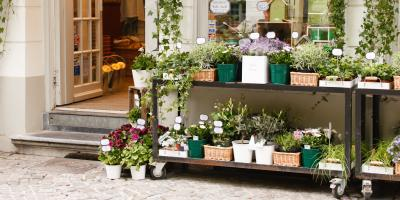 How to Move Your Indoor Plants Outside for Spring, Colerain, Ohio