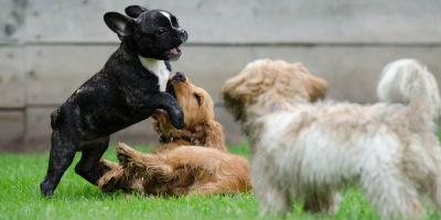 New Policy for Bordetella Vaccine and Fecal Testing, ,