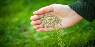 Landscaping Experts Share 3 Reasons Fall Is the Best Time to Seed Your Lawn, Plymouth, Minnesota