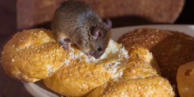 Do's and Don'ts of Handling a Mouse Infestation, Port Orchard, Washington