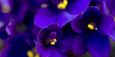 Your Port Jervis Florist Shares 5 Great Flowers for Small Apartments, Port Jervis, New York