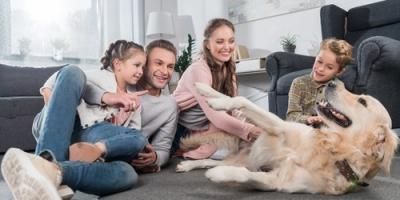 Pet-Resistant Floor Coverings Will Save You Money on Repairs, Prairie du Chien, Wisconsin