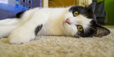 5 Tips to Keep Carpets in a Pet Household Clean, Prairie du Chien, Wisconsin