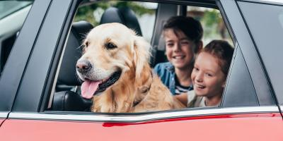 3 Tips for Traveling With Your Pet, Prairie du Chien, Wisconsin