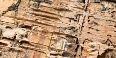 5 Common Signs You Should Call for Termite Treatment, Lexington-Fayette, Kentucky