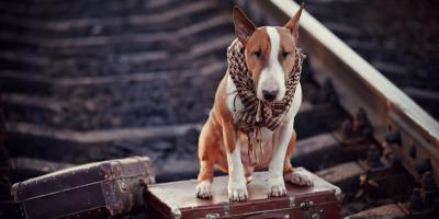 Des Moines' Top Professional Movers Share 5 Tips for Moving With Pets, Lee, Iowa