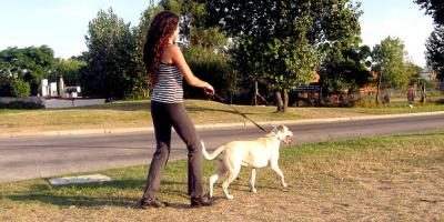 4 Benefits of Using a Professional Dog Sitter, Aliso Viejo, California