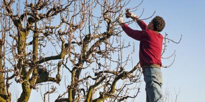 What You Should Know About Tree Pruning, North Huntingdon, Pennsylvania