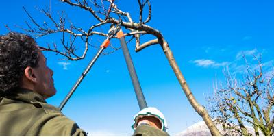 What Is the Best Time for Tree Pruning?, York, South Carolina