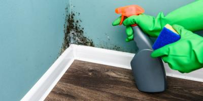 Home Inspector's Guide to 4 Most Dangerous Molds, Anderson, Ohio