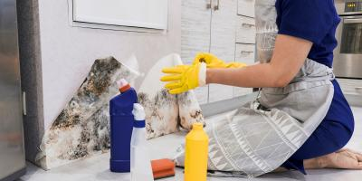 4 Reasons to Invest in Professional Mold Removal , Raleigh, North Carolina