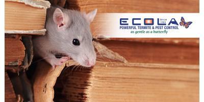 Do you trust your pest control company?, Orcutt, California